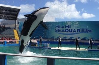 ¿Qué hacer en Miami?: Guía de viajes a Miami